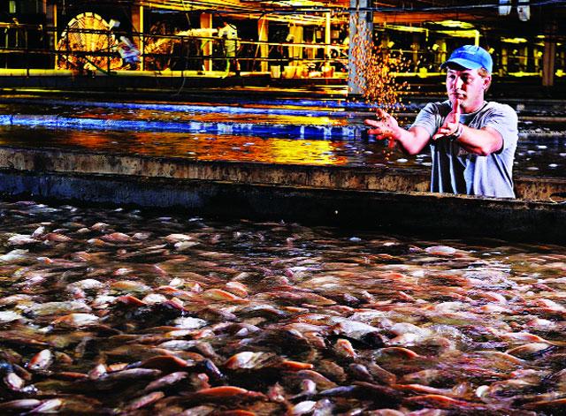 nuôi thủy sản trên cạn tại mỹ