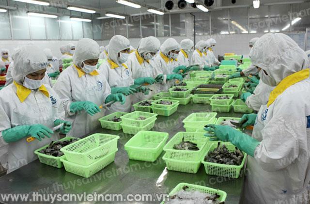 Xuất khẩu tôm sang thị trường Australia