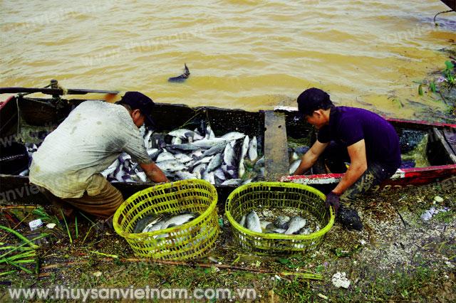 Nhiều thủy sản chết có thể là do thiếu ôxy