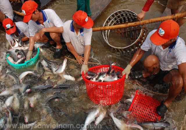 Tổng sản lượng thủy sản quý I/2013 đạt 1,15 triệu tấn