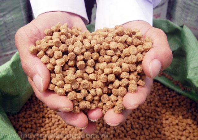 Thắt chặt quản lý, kiểm tra kháng sinh trong thức ăn chăn nuôi và thủy sản
