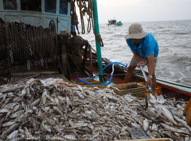 sửa đổi luật thủy sản