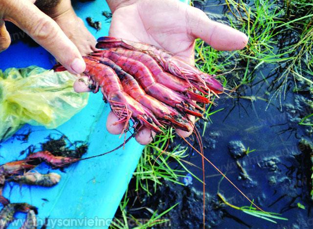http://thuysanvietnam.com.vn/uploads/article2/baiviet/tieu%20diem/z300-Thuy-san-Viet-Nam2220-.jpg