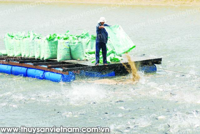 Làm gì để cá tra bớt khó?