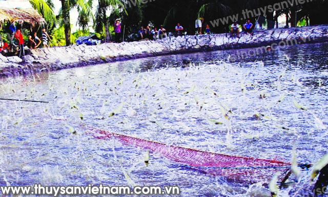 http://thuysanvietnam.com.vn/uploads/article2/baiviet/tieu%20diem/z300-Thuy-san-Viet-Nam3405-.jpg