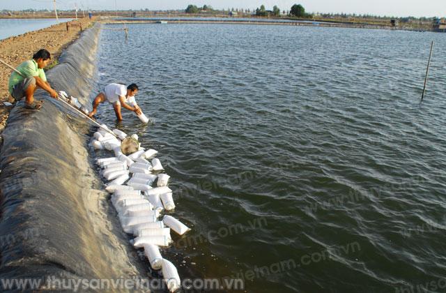 http://thuysanvietnam.com.vn/uploads/article2/baiviet/tieu%20diem/z300-Thuy-san-Viet-Nam3747-.jpg