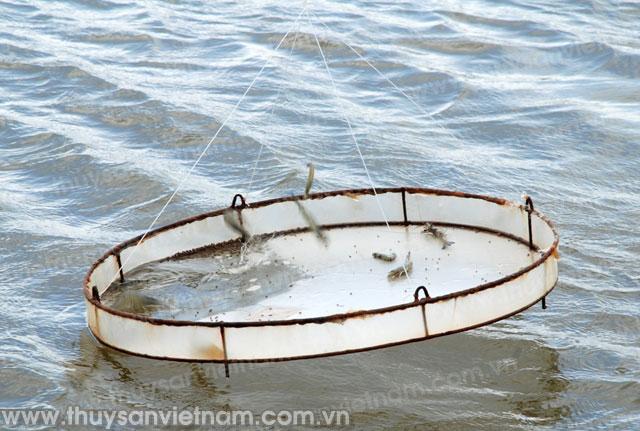 http://thuysanvietnam.com.vn/uploads/article2/baiviet/tieu%20diem/z300-Thuy-san-Viet-Nam3978-.jpg