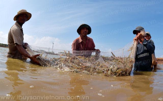 vietshrimp làn gió mới cho ngành tôm việt