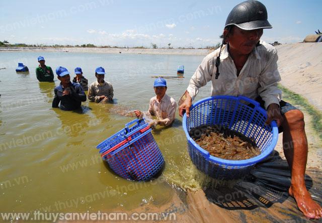 http://thuysanvietnam.com.vn/uploads/article2/baiviet/tieu%20diem/z300-con-tom-978-.jpg