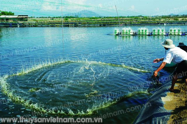 http://thuysanvietnam.com.vn/uploads/article2/baiviet/tuvantieudung/z300-Thuy-san-Viet-Nam3362-.jpg