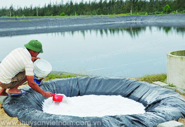 Cần quản lý tốt chất lượng ao nuôi tôm