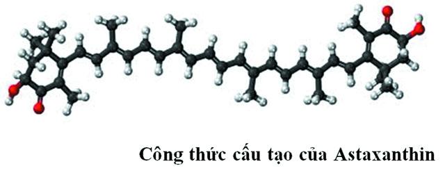 Astaxanthin trong nuôi tôm
