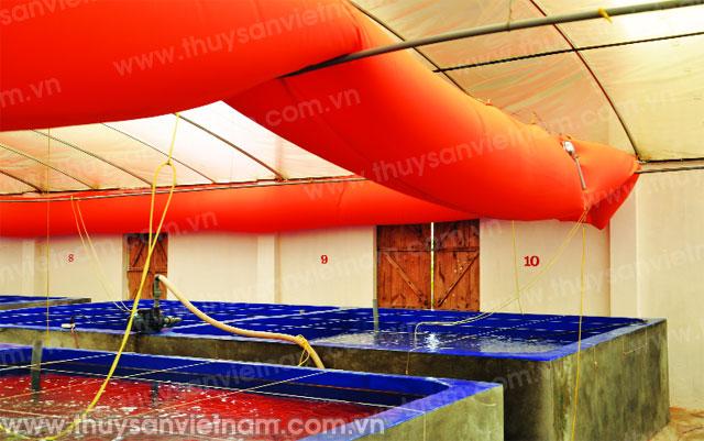 Hệ thống nâng nhiệt cho trại tôm