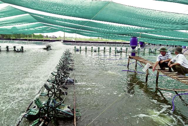 Diện tích thủy sản thiệt hại tăng mạnh