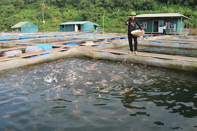 Phát triển nuôi cá lồng